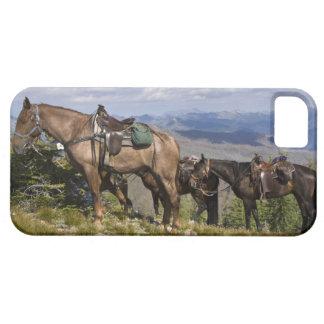 Caballos caballus del ferus del Equus en la desc iPhone 5 Fundas