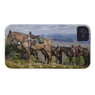 Caballos caballus del ferus del Equus en la desc