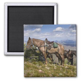 Caballos caballus del ferus del Equus en la desc Imán De Nevera