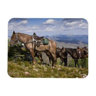 Caballos caballus del ferus del Equus en la desc Imanes Flexibles