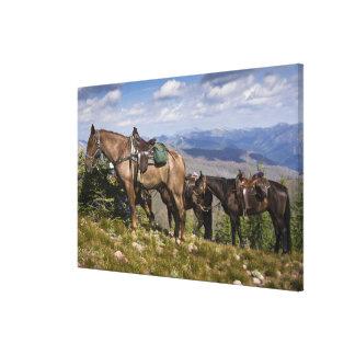 Caballos caballus del ferus del Equus en la desc Impresión En Lienzo Estirada