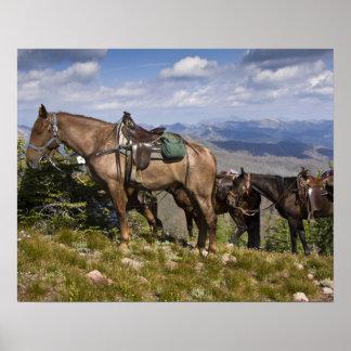 Caballos caballus del ferus del Equus en la desc Impresiones