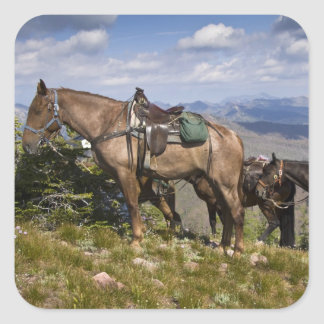 Caballos caballus del ferus del Equus en la desc Calcomania Cuadradas Personalizada