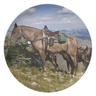 Caballos caballus del ferus del Equus en la desc Platos De Comidas