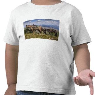 Caballos caballus del ferus del Equus en la desc Camisetas