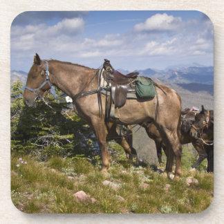 Caballos caballus del ferus del Equus en la desc Posavaso