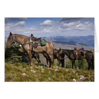 Caballos caballus del ferus del Equus en la desc Tarjeton
