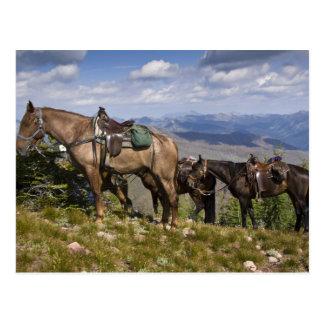 Caballos caballus del ferus del Equus en la desc Postal