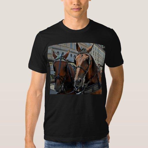 Caballos Camisas