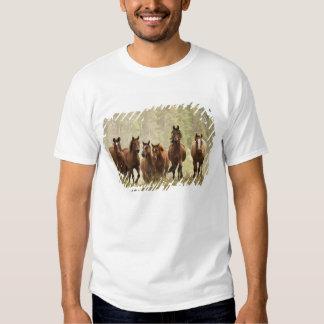 Caballos cresting la pequeña colina durante el playeras