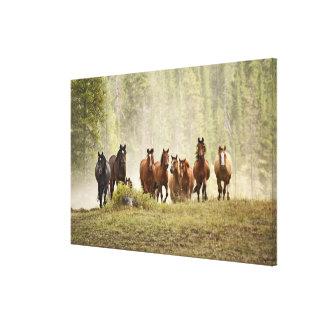 Caballos cresting la pequeña colina durante rodeo, impresiones en lienzo estiradas
