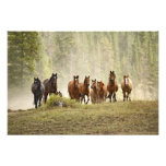 Caballos cresting la pequeña colina durante rodeo, impresión fotográfica