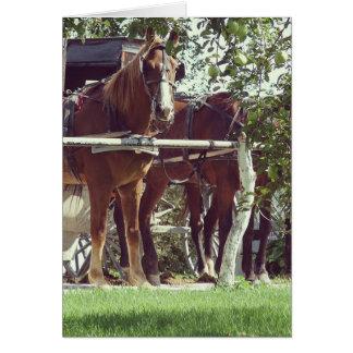 Caballos de Amish en el poste que engancha Tarjeta Pequeña