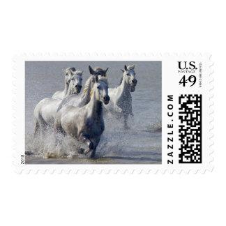 Caballos de Camargue que corren en la región Sellos Postales