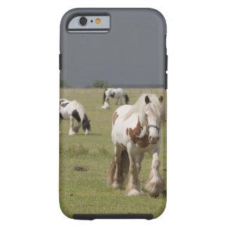 Caballos de Clydesdale en un campo, Funda Para iPhone 6 Tough
