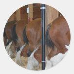Caballos de Clydesdale Etiquetas Redondas
