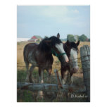 Caballos de Clydesdale Posters