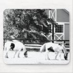 Caballos de Clydesdale que pastan el mousep (blanc Tapetes De Raton