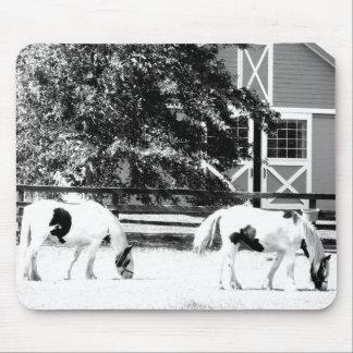 Caballos de Clydesdale que pastan el mousep blanc Tapetes De Raton