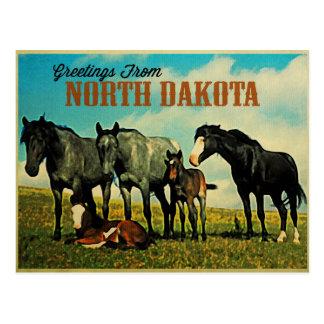 Caballos de Dakota del Norte Nokota Postales