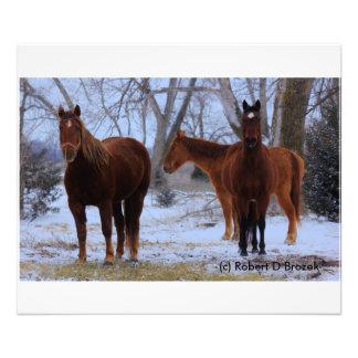 Caballos de Kansas con la ampliación de la foto Fotografía