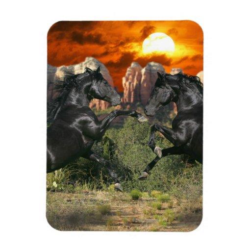 Caballos de la fantasía: Magia negra Imanes Rectangulares