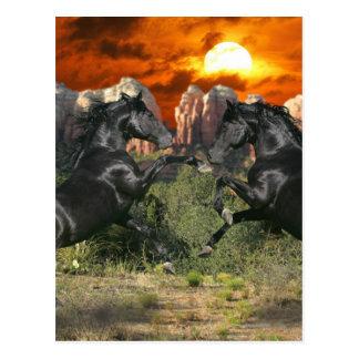 Caballos de la fantasía: Magia negra Tarjeta Postal