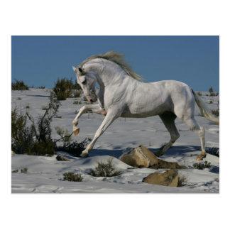 Caballos de la fantasía: Rey de la nieve Postal