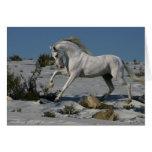 Caballos de la fantasía: Rey de la nieve Felicitacion