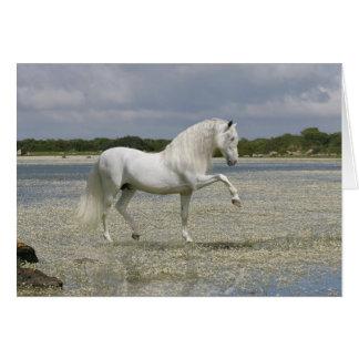 Caballos de la fantasía: Señor del lago Tarjeta De Felicitación