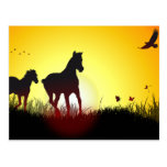 caballos de la mañana tarjetas postales