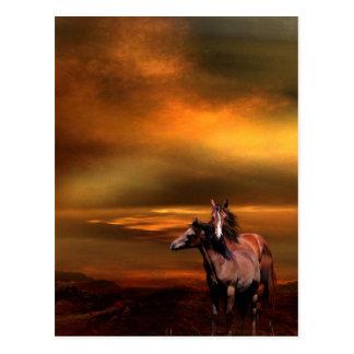 Caballos de la puesta del sol tarjeta postal