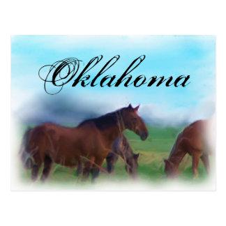 Caballos de Oklahoma Tarjeta Postal