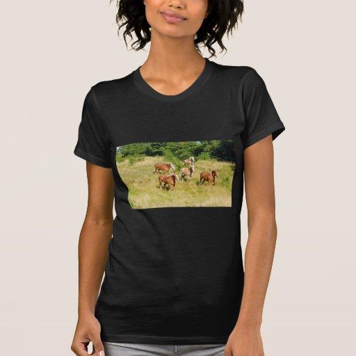 Caballos de proyecto que corren en campo tee shirts