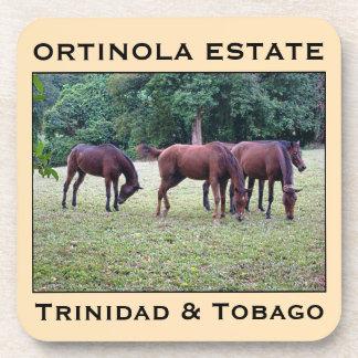 Caballos de Trinidad and Tobago Posavaso