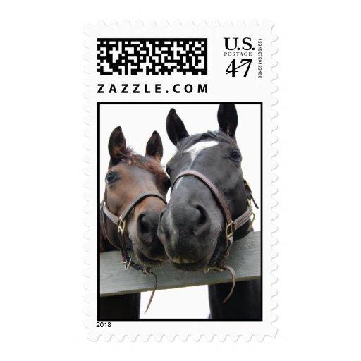 Caballos del amor del caballo estampilla