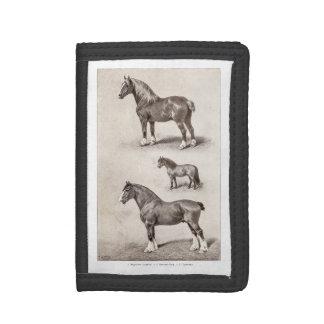 Caballos del belga de Clydesdale Shetland del caba