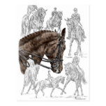 Caballos del Dressage en medio galope recogido del