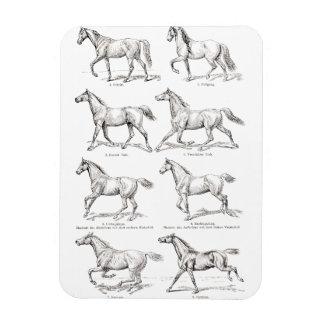 Caballos del ejemplo de los pasos del caballo de iman de vinilo