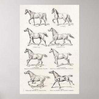 Caballos del ejemplo de los pasos del caballo de l impresiones