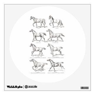 Caballos del ejemplo de los pasos del caballo de vinilo decorativo