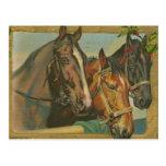 Caballos del navidad del vintage tarjetas postales