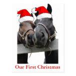 Caballos del navidad tarjeta postal