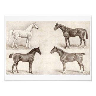 Caballos del vintage - caballo de las plantillas d fotografía