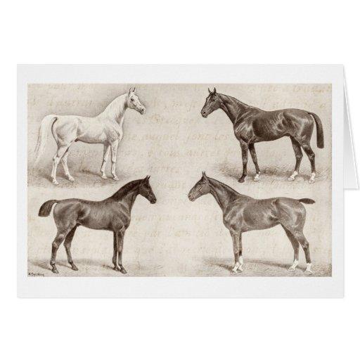 Caballos del vintage - caballo de las plantillas d felicitaciones