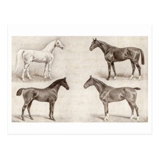 Caballos del vintage - caballo de las plantillas d postal