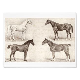 Caballos del vintage - caballo de las plantillas fotografía