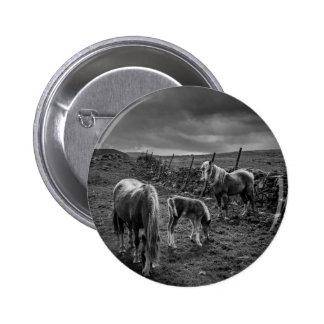 Caballos e insignia del botón del potro pin redondo de 2 pulgadas