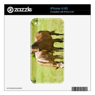 Caballos en el valle de San Rafael, Arizona Calcomanías Para iPhone 4
