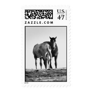 Caballos en franqueo blanco y negro timbres postales